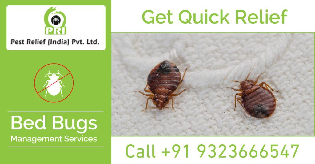 Bed Bug Management Services