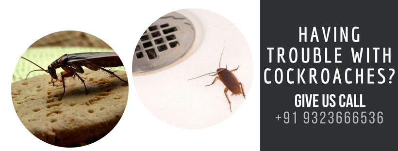 Cockroaches Relief Services in Mumbai