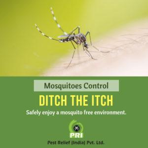 Mosquito Management Treatment